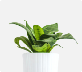 img-tanaman-1-2