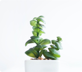 img-tanaman-1-3